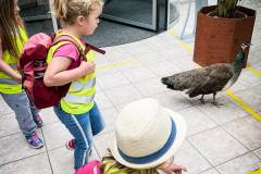 ausflug-kita-gwunderwelt-papiliorama-pfahl
