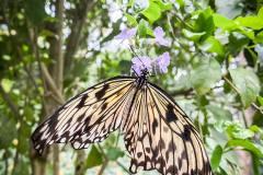 ausflug-kita-gwunderwelt-papiliorama-schöner-schmetterling