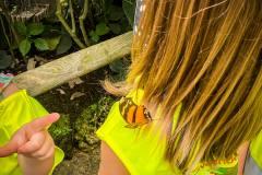 ausflug-kita-gwunderwelt-papiliorama-schmettelring-auf-der-schulter-des-maedchens