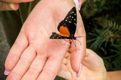 ausflug-kita-gwunderwelt-papiliorama-schmetterling-auf-der-hand