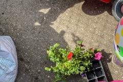 ferienpass-fruehling-kita-gwunderwelt-kraeutergarten-blumen