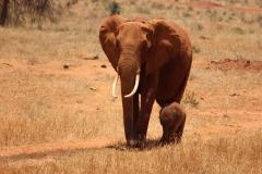 elephant-274003