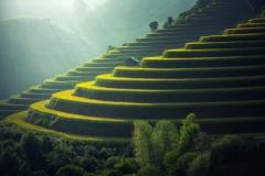 rice-plantation-1822444